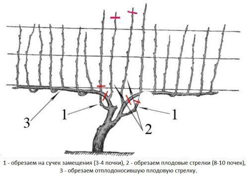 obrezka-vinograda-1-1.jpg
