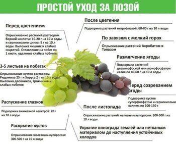 podkormka-vinograda-prostye-sovety-po-uluchsheniyu-plodonosheniya.jpg